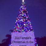 Zoo Tampa Christmas in the wild